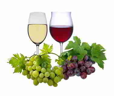 Wein beeinflusst die Fettverbrennung