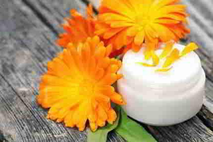 Das Heilkraut die Ringelblume